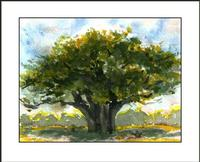 shea butter tree painting soap handmade