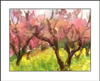Shalom watercolor almond trees